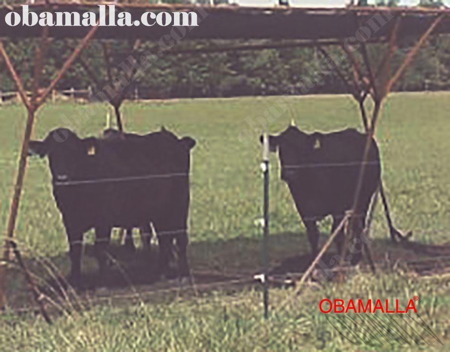 malla sombra obamalla instalada para la protección del ganado.