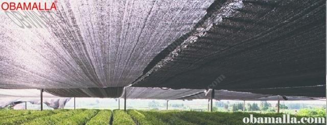 malla sombreadora protegiendo cultivos de los climas extremos.