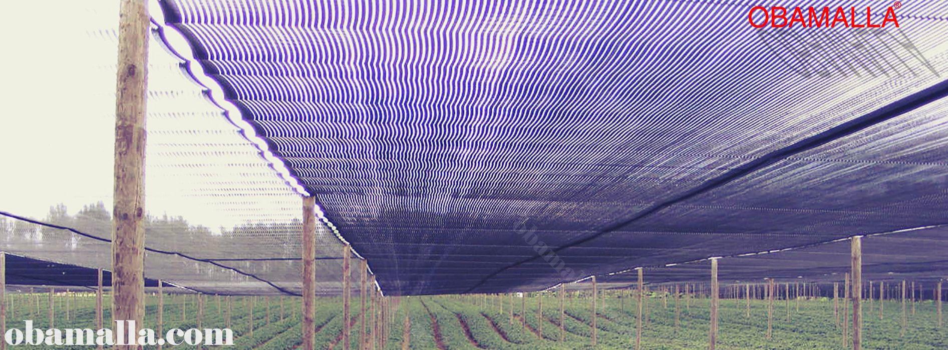 red de sombreado instalada en campo para protección contra los rayos del sol.